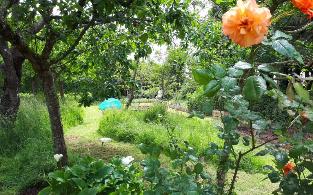 Allotment & Orchard