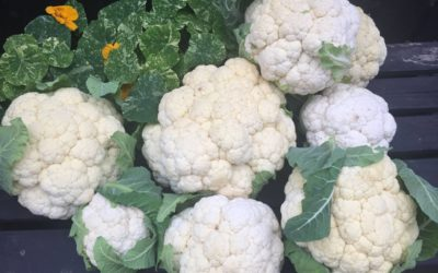 Cauliflower Crisis